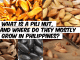 What is a Pili Nut, and where do they mostly grow in Philippines?